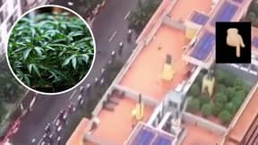 Helicopter For Spain's Vuelta A Espana Captured TV Footage Of A Rooftop Weed Farm