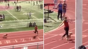 Dog Escapes Owners To Run 100m In 10.5 Seconds - One Second Behind Usain Bolt's World Record