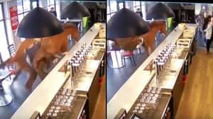 CCTV Footage Captures Runaway Horse Charging Through Bar