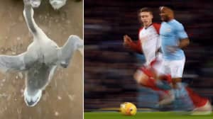 Raheem Sterling Hilariously Reacts To Viral Video Of Goose Running Like Him