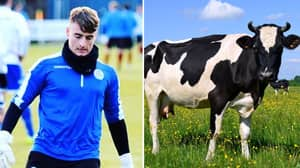 Queen Of The South In Goalkeeper Crisis After Reserve Is Injured By A Cow