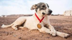 Dog Runs For More Than 100 Miles To Complete Desert Marathon