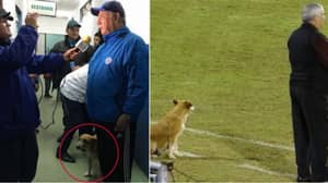 Stray Dog Is Assistant Manager Of Paraguayan Club And Watches From Technical Area
