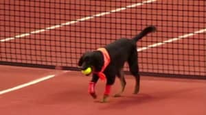 Brazilian Open Use Shelter Dogs As Ballboys