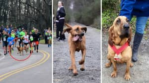 Dog Accidentally Runs Half-Marathon After Being Let Out For Pee, Finishes 7th