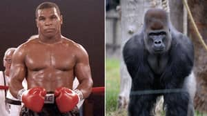 Mike Tyson Once Offered A Zookeeper $10,000 To Let Him Fight A Silverback Gorilla