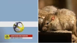 Goal-Line Technology Out Of Use In Nice vs Toulouse Game Because Of Rats Eating Cables