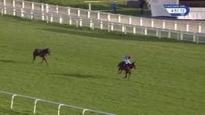 WATCH: Jockey Blows Massive Lead After Misjudging Winning Post