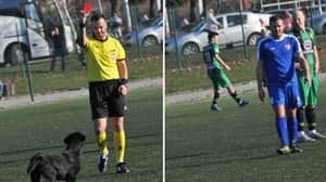 Dog Sent Off For Invading Pitch FOUR Times In Serbian Football Game