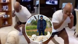 53-Year-Old Mike Tyson Shows Frightening Speed And Boxing Skills As He Spars With His Dog