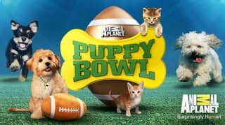 Puppy Bowl Is The Sport We've Always Needed