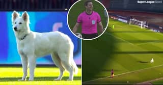 Dog Invades Pitch During Swiss Super League Game, President Comes To Collect
