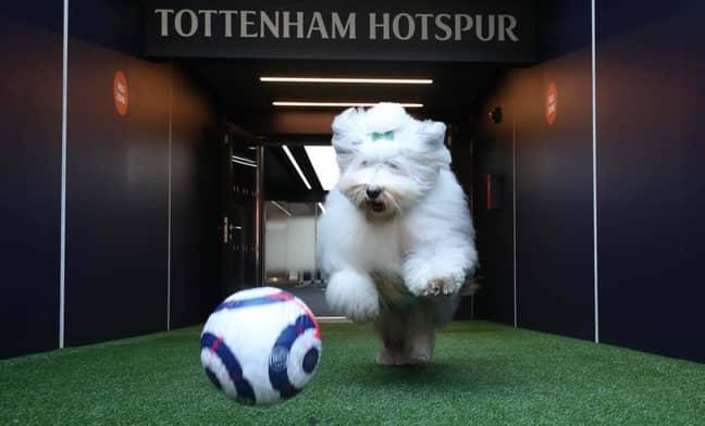 Image: Tottenham Hotspur's official website.