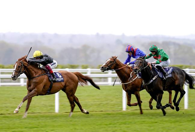 Stradivarius could win the Gold Cup for a record fourth time this afternoon