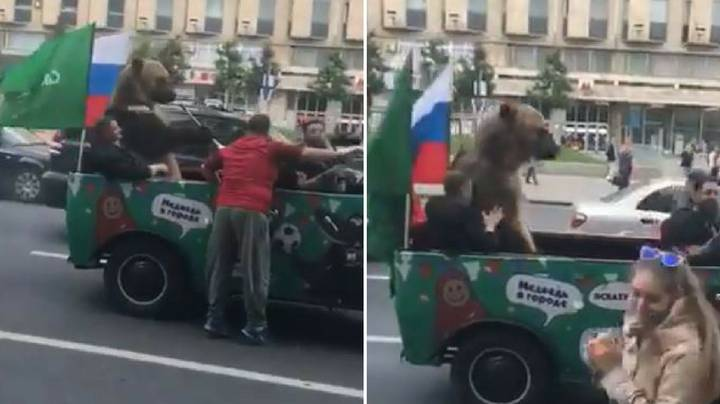 Bear Forced To Play Vuvuzela During Russia's World Cup Street Celebrations
