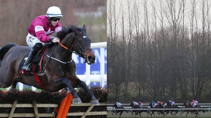 ODDSbible Racing: Tips - 2nd February