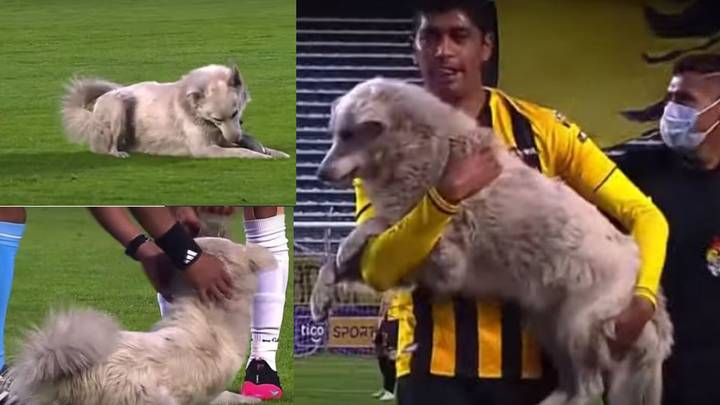 The Moment A Dog Invades Football Pitch And Steals Boot