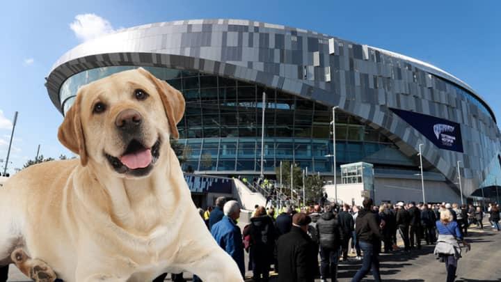 Tottenham Hotspur Install Toilets For Dogs At New Stadium