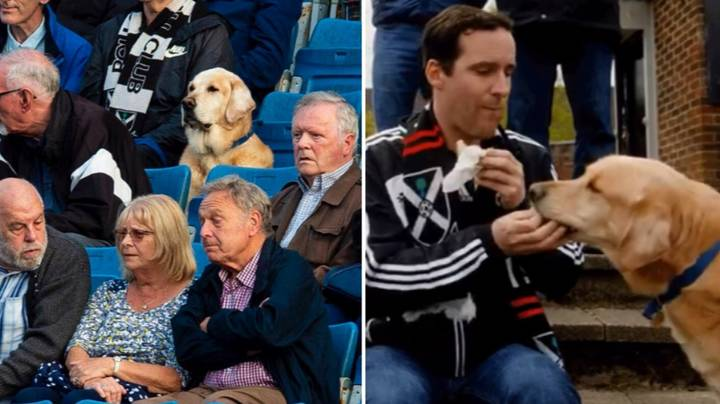 Dog Goes Viral For Watching Scottish League Club From The Stands