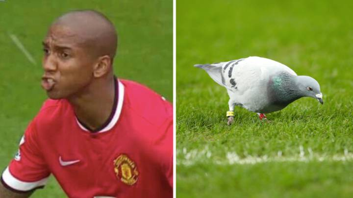 Ashley Young Still Claims That A Bird Didn't Poo In His Mouth
