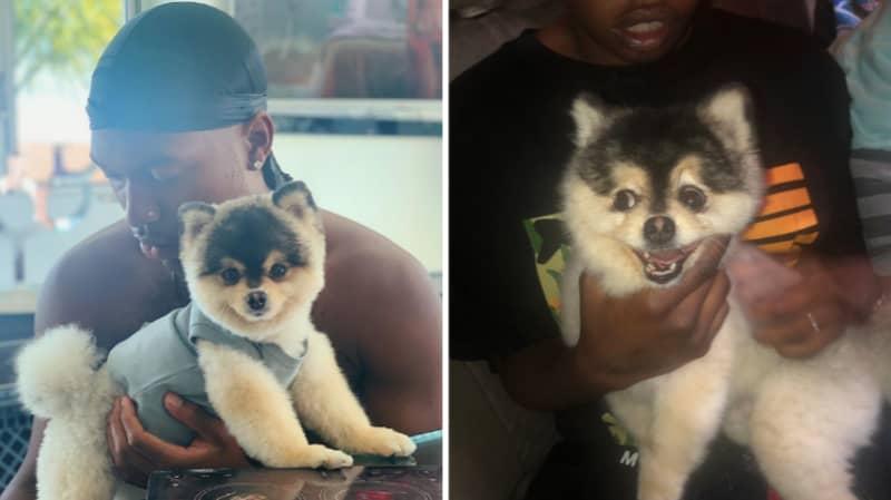 Daniel Sturridge's Dog Has Been Found