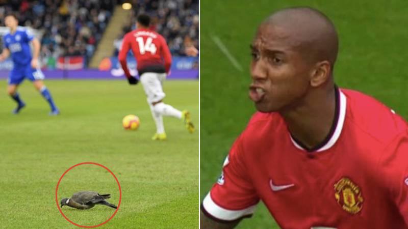 Jesse Lingard Trolls Ashley Young Over Infamous 'Bird Poo' Incident