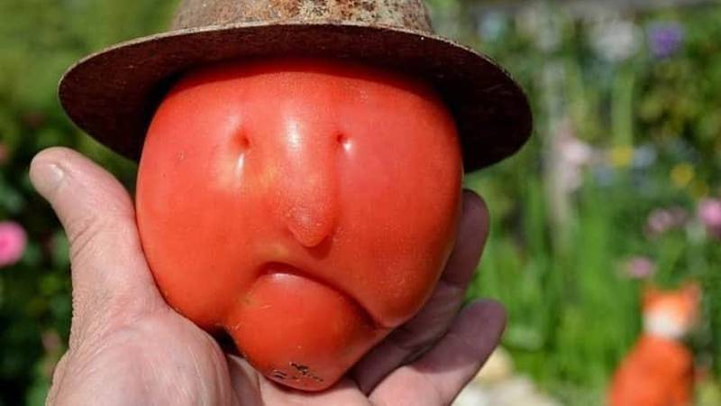 NBA Fans Are Losing It Over This Misshaped Tomato