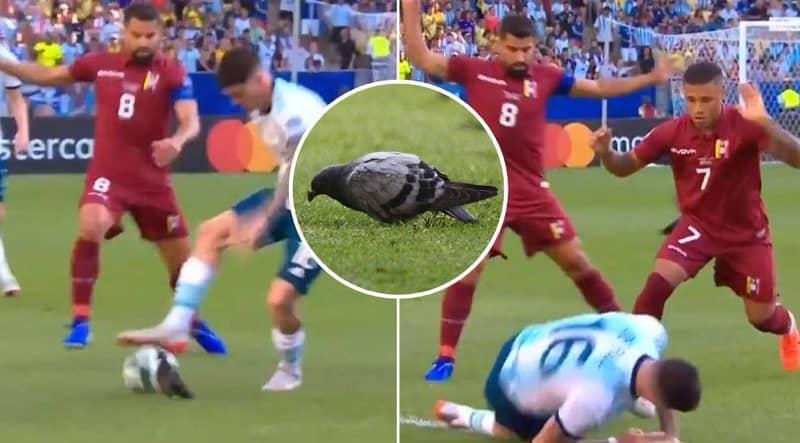 Rodrigo De Paul Is Embarrassingly 'Tackled By A Pigeon' During Argentina's Copa América Clash