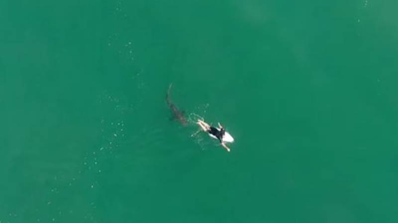 Drone Footage Shows 1.5m Great White Shark Circling Pro Surfer